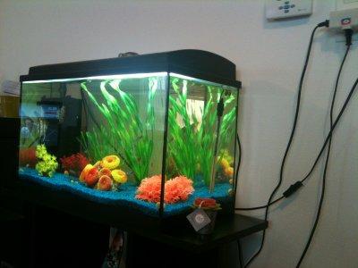 Blog de monosaka260 mon osaka 260 for Quoi mettre aquarium poisson rouge