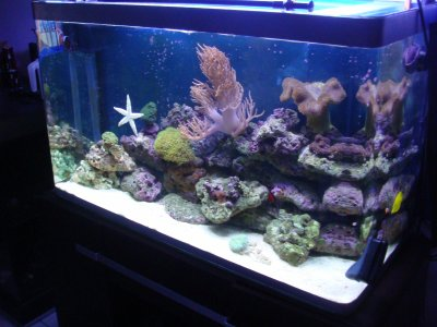 Choisir son type d 39 aquarium marin mon osaka 260 for Aquarium osaka 260