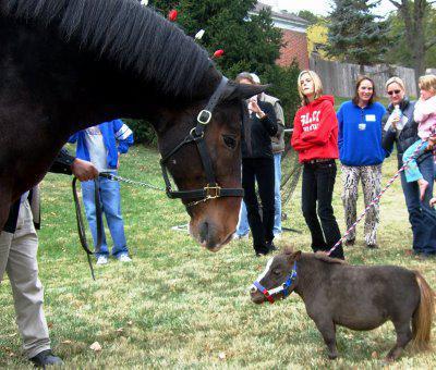 le plus grand cheval du monde avec le plus petit cheval du monde mademoizell dadas. Black Bedroom Furniture Sets. Home Design Ideas