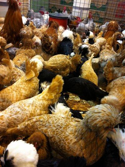 foire agricole de paris mes photos perso
