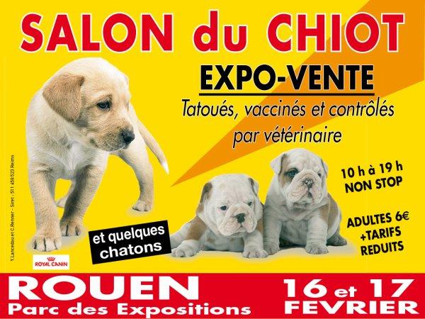 Blog de blogsebhebrard2 page 284 blog de seb - Salon du chiot brest ...