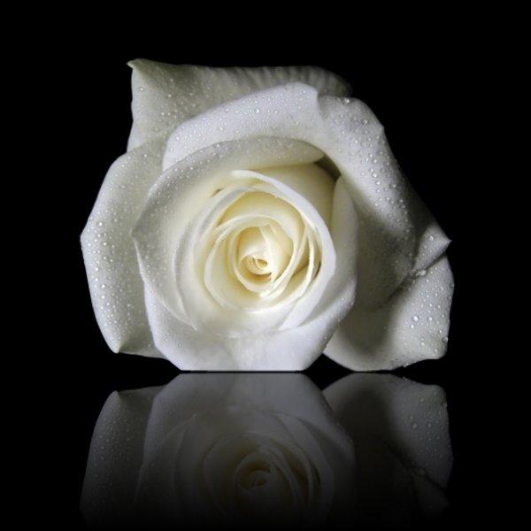 La signification des roses blog de dede collins de blues - Signification nombre de roses ...
