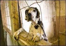 La maltraitance des animaux, la violence envers eux... Je veux changer ça!!! Stop à ces choses inhumaines!!!!!!!!!!!!!!!