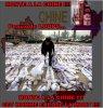 Chine : Des peaux de loups sur le march�