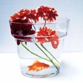 Extrait d 39 un blog la theorie du poisson rouge ce que l for Bocal en verre pour poisson rouge