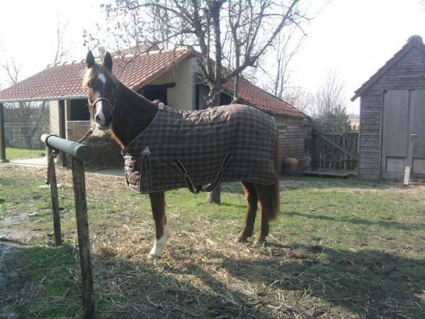 le couvrir ou pas l 39 ducation d 39 un cheval ne se fait pas que sur. Black Bedroom Furniture Sets. Home Design Ideas