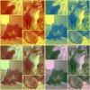 mes-petits-chats28