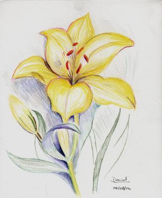 Lys en couleur dessins de daniel - Dessin fleur de lys ...