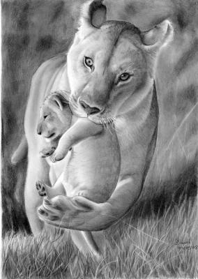 Maman lionne dessins de daniel - Lionne dessin ...
