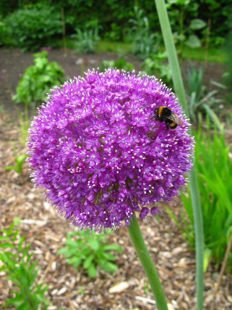 Diverses fleurs au jardin plant exo62 for Fleurs au jardin