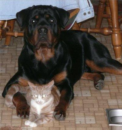 Big Dog Rescue Wv