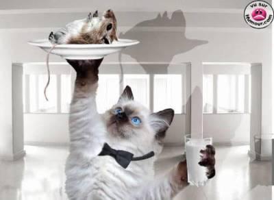 creer un serveur de chat