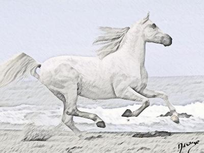 Magnifique dessin d 39 un cheval blanc blog pour les accro - Dessin de cheval magnifique ...