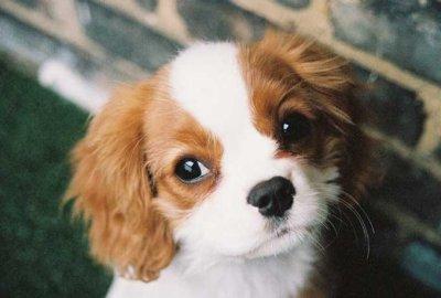 blog de chien de toute race page 3 blog de chien de. Black Bedroom Furniture Sets. Home Design Ideas