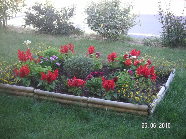 Mes fleurs mon parterre devant la maison chez for Amenager parterre devant maison