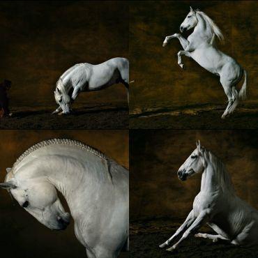Salon du cheval d 39 el jadida le riad azama maison d for Salon du cheval albi