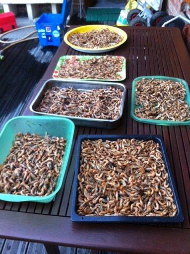 P�che � la Crevette plage de Malo (18-10-14)