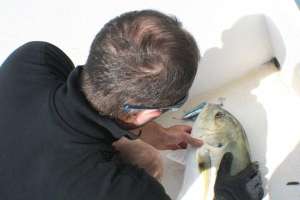 P�che de la carangue aux Bijagos (11/2014)