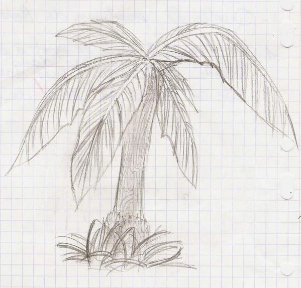 Palmier tous mes dessins - Palmier dessin ...