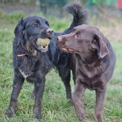 Ava une maison de retraite pour sauver les vieux animaux for Aide aux parents en maison de retraite