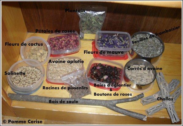 L 39 alimentation du chinchilla blog animaux - Que mange les punaises ...