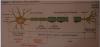 P�le 3 : Chapitre 13 : Histologie des tissus nerveux et musculaires