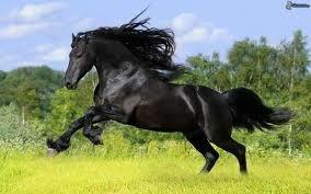 le plus beau cheval