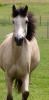 horses-story-love