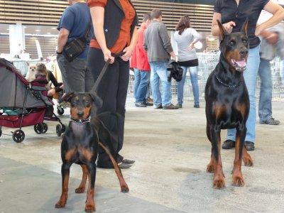 Rencontre canine paris