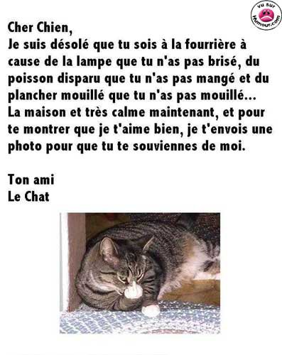 Chat marrant chevaux lisa - Photo chat marrant ...