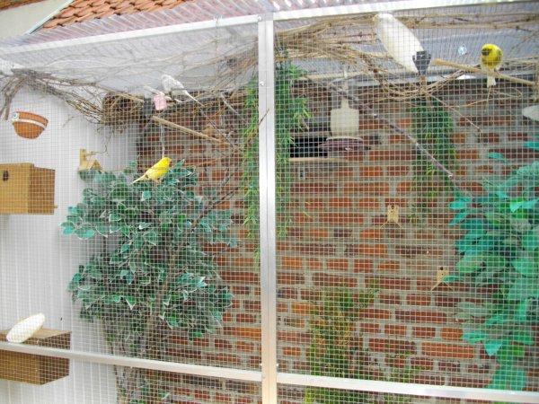 Nouvelle d co dans la voli re ext rieur ma passion les - Cage a oiseaux en bois deco ...