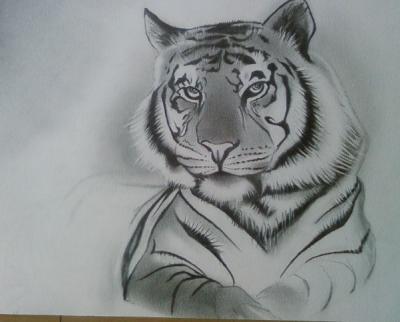 Tigre blog m t or impact - Comment dessiner un tigre ...