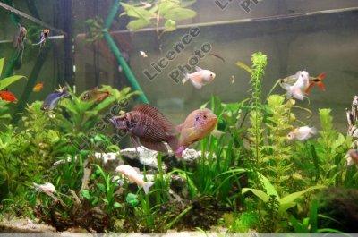 types de bac aquarium eau douce le bac communautaire