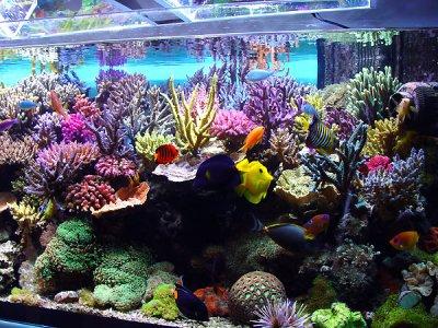 Types de bac aquarium eau de mer vie l 39 aquariophilie d for Pompe bac a poisson