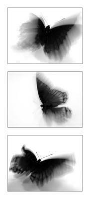 un papillon s 39 envole 39 39 l 39 amour est un. Black Bedroom Furniture Sets. Home Design Ideas
