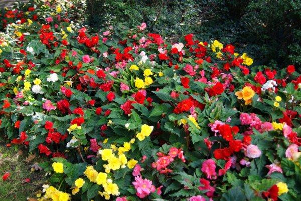 un beau massif de fleurs pour nos beaux yeux yoyo il se trouve dans un parc a nantes. Black Bedroom Furniture Sets. Home Design Ideas