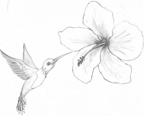 Post le vendredi 30 mars 2012 10 15 freddesign - Dessin d hibiscus ...
