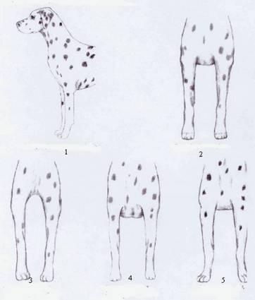Dalmatien
