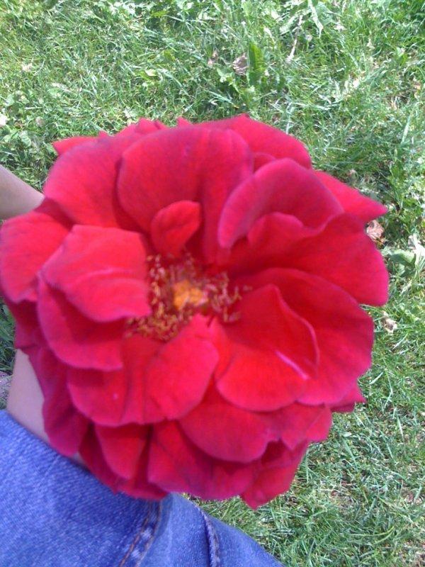 L'amour c'est comme une fleur..