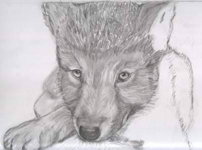 Petit loup mes dessins - Petit loup dessin ...