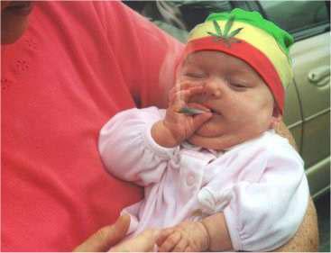 Bebe cannabis good luck - Poisson marrant ...