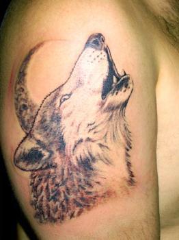 Tatoo loup tatouages tatoo le plus gros skyblog de - Tatouage loup femme ...