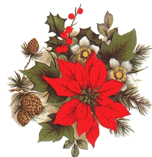 histoire du poinsettia la fleur de noel blog de crealysma. Black Bedroom Furniture Sets. Home Design Ideas