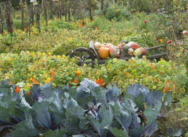Que faire au potager en octobre et novembre association des jardins familiaux d 39 harfleur - Que planter en novembre au potager ...