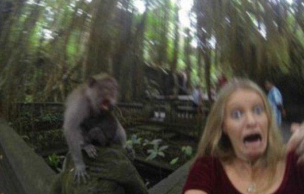Voici le selfie rat� � bali � cause de l'attaque de singe