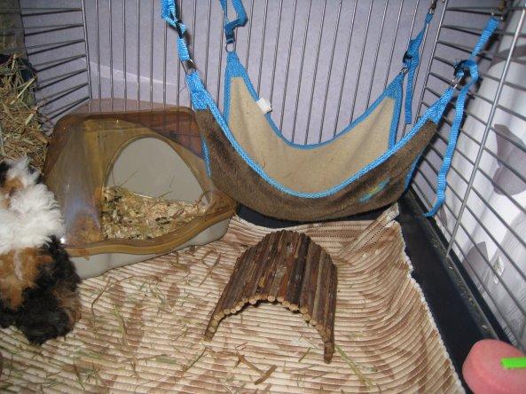 blog de cochonsdinde67 mes 4 cochons d 39 inde. Black Bedroom Furniture Sets. Home Design Ideas