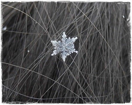 Flocon de neige en macro magique - Vrai flocon de neige ...