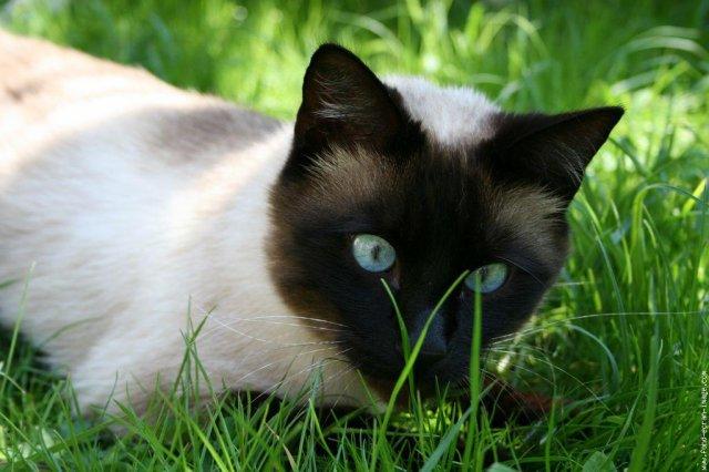 black tabby kitten wow