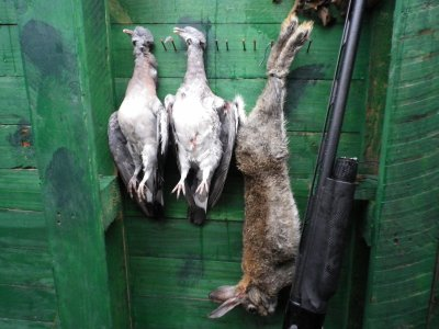 samedi matin 06/11/10  poste a pigeon