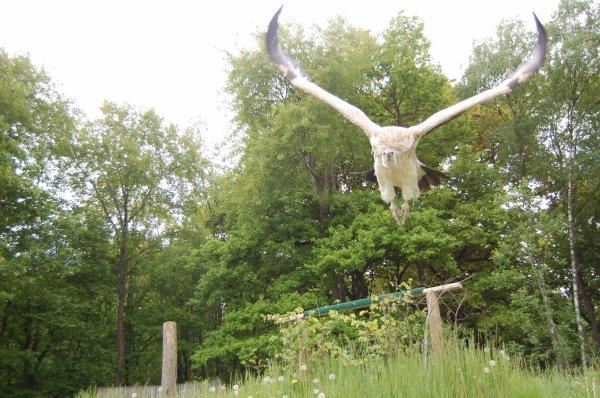 Parc animalier de rembouillet dans les yvelines ermangan for Parc animaux yvelines